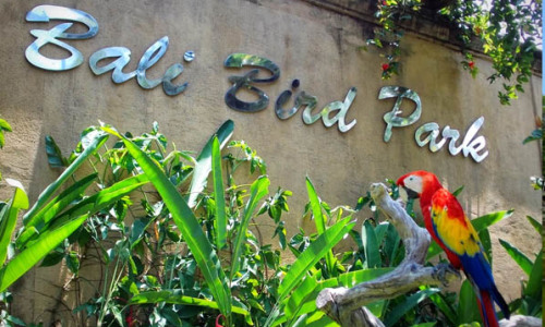 The Bali Bird Park of Paradise