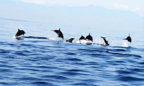 Lovina Beach Dolphin Tour