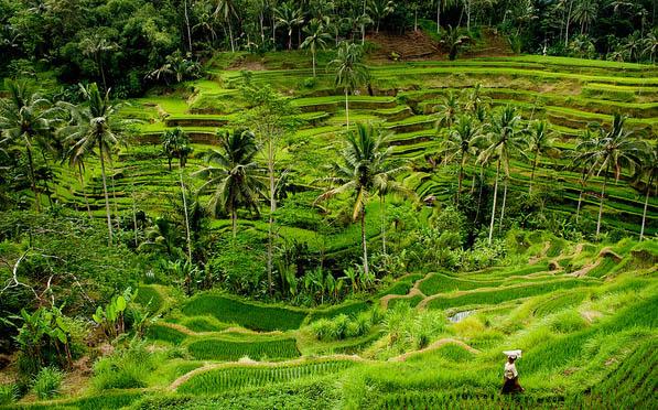 Tegalalang rice terrace ubud bali bali spartan tour for Terrace ubud bali