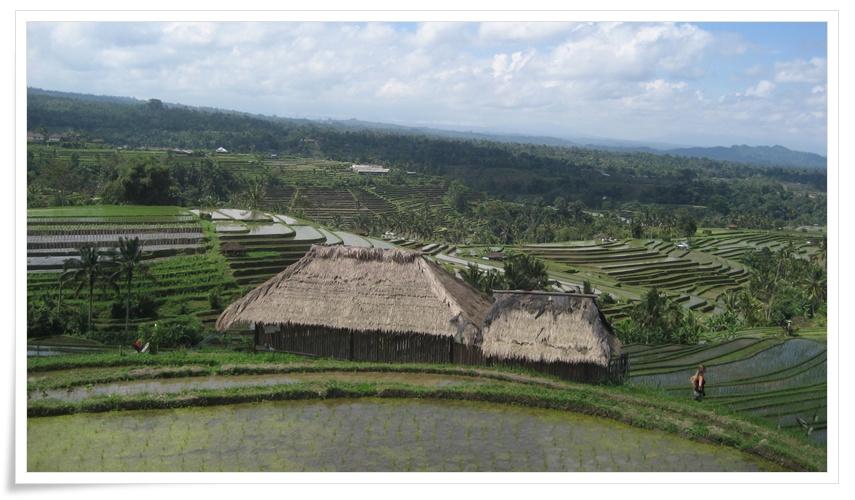 Bali Sightseeing driver