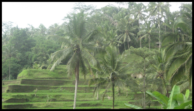 Some Lists of Suggested Half Day Bali Tour